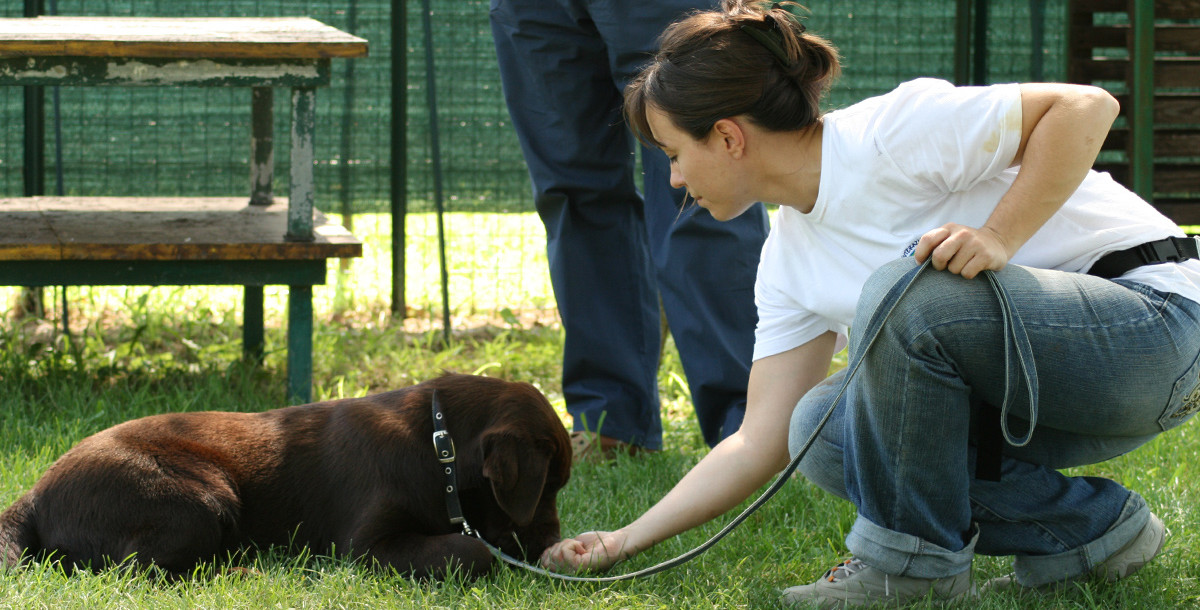 Corso educazione di base del cane