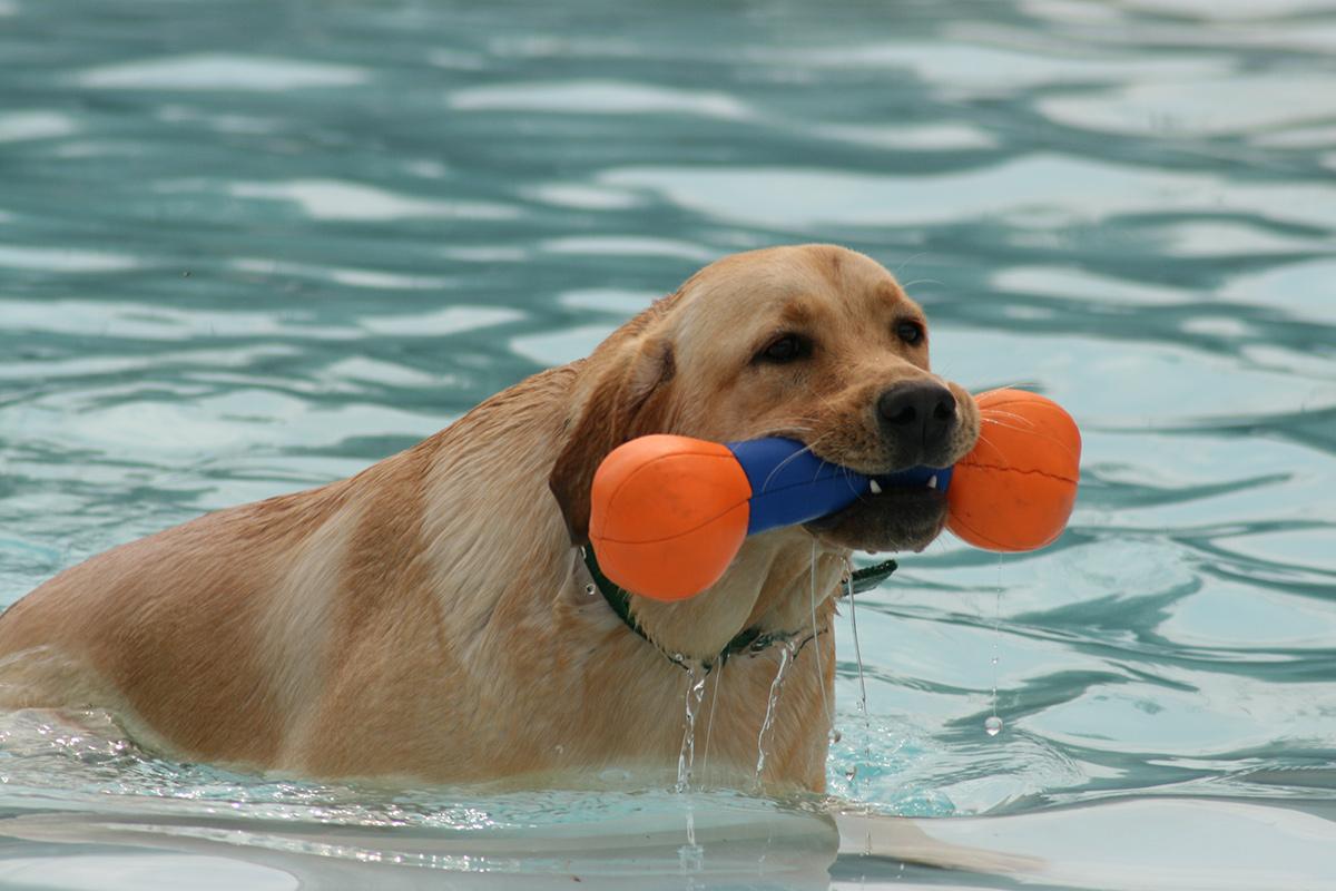 Corso di ricerca - Esercizi in acqua