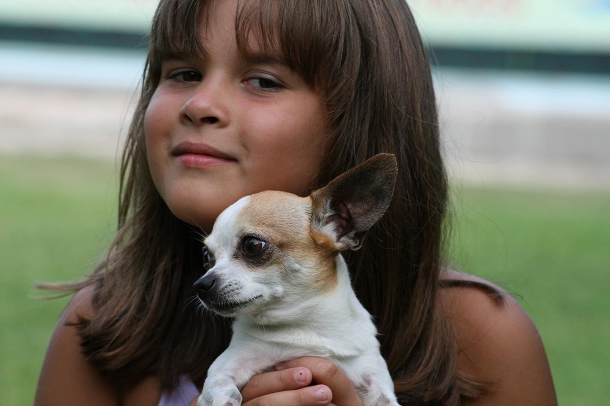Corso di socializzazione e puppy class