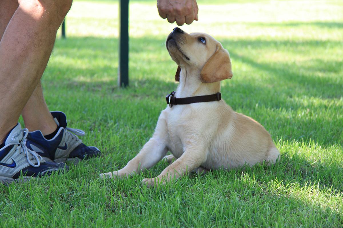 Una fase del corso puppy class